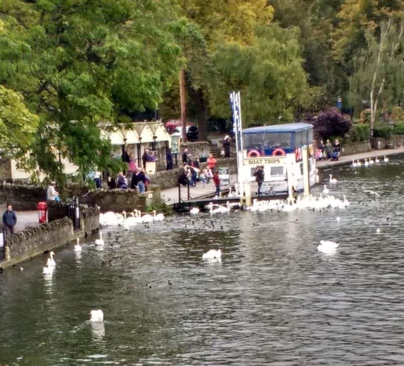 a boat cruise on the Eton River which is full of swans