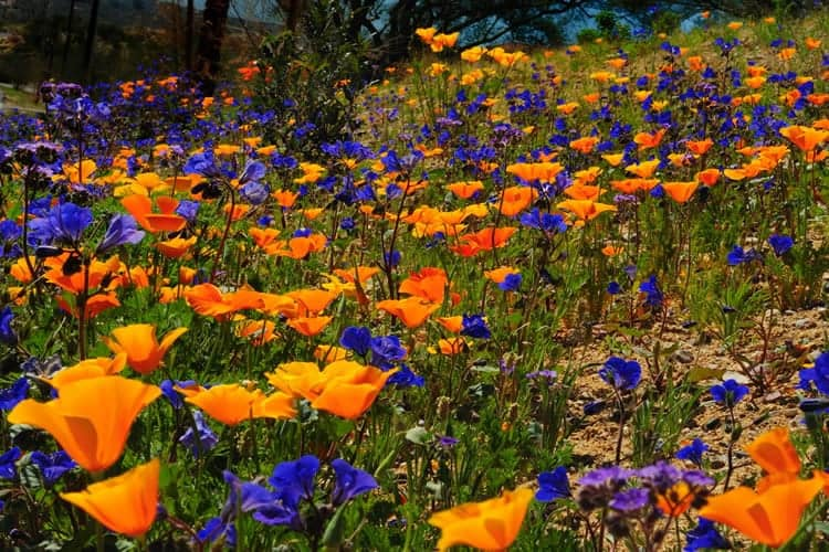 flower tourism in India