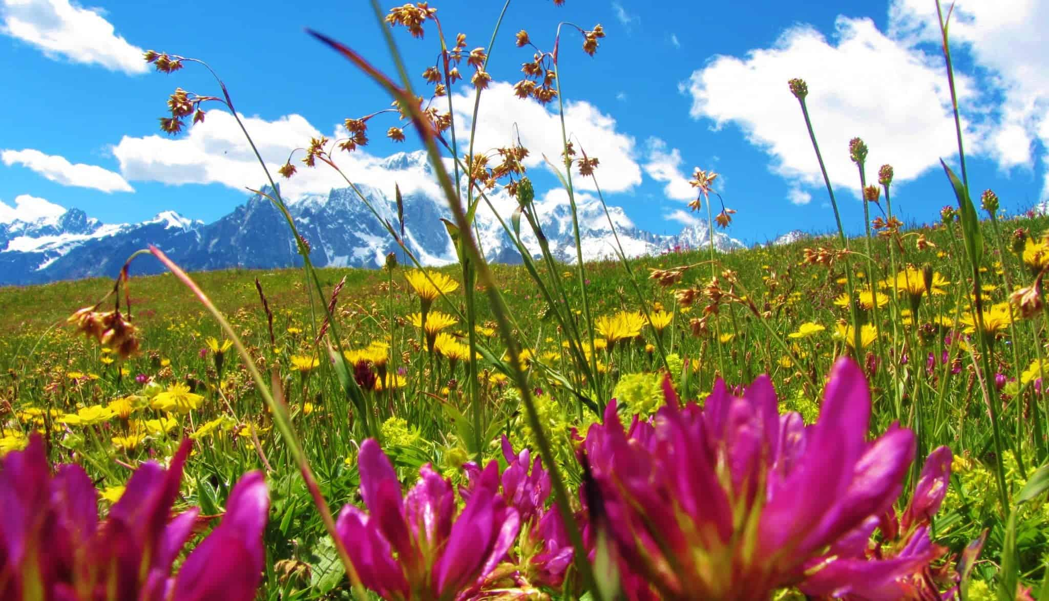 Best Places in the World to see flowers | Flower Tourism