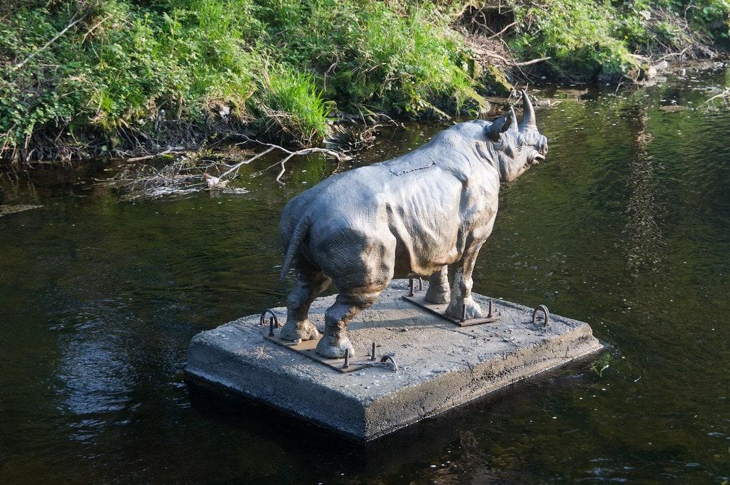 Dodder Rhino