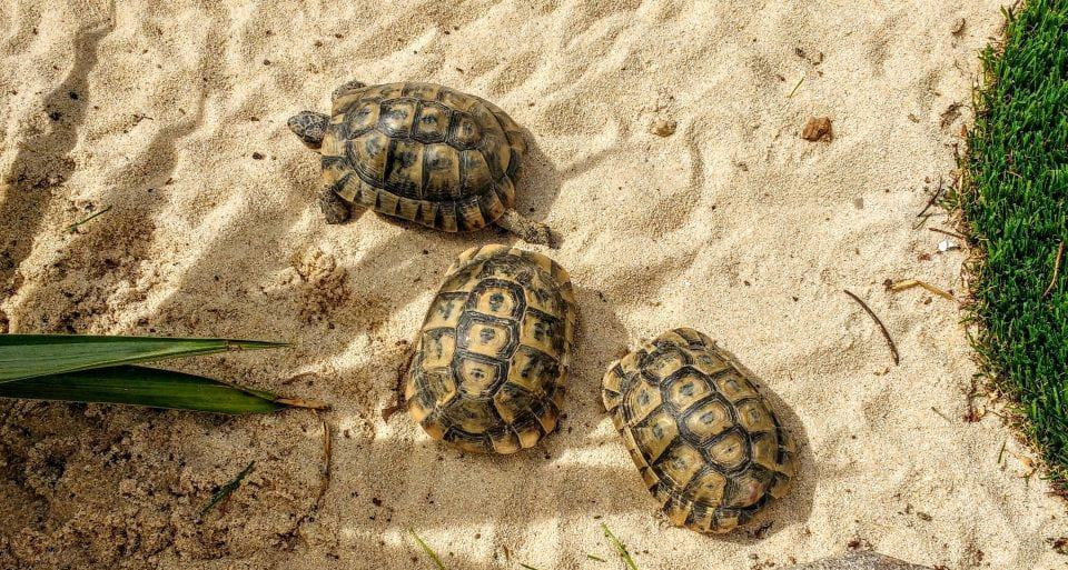 housesitting tortoises in Spain