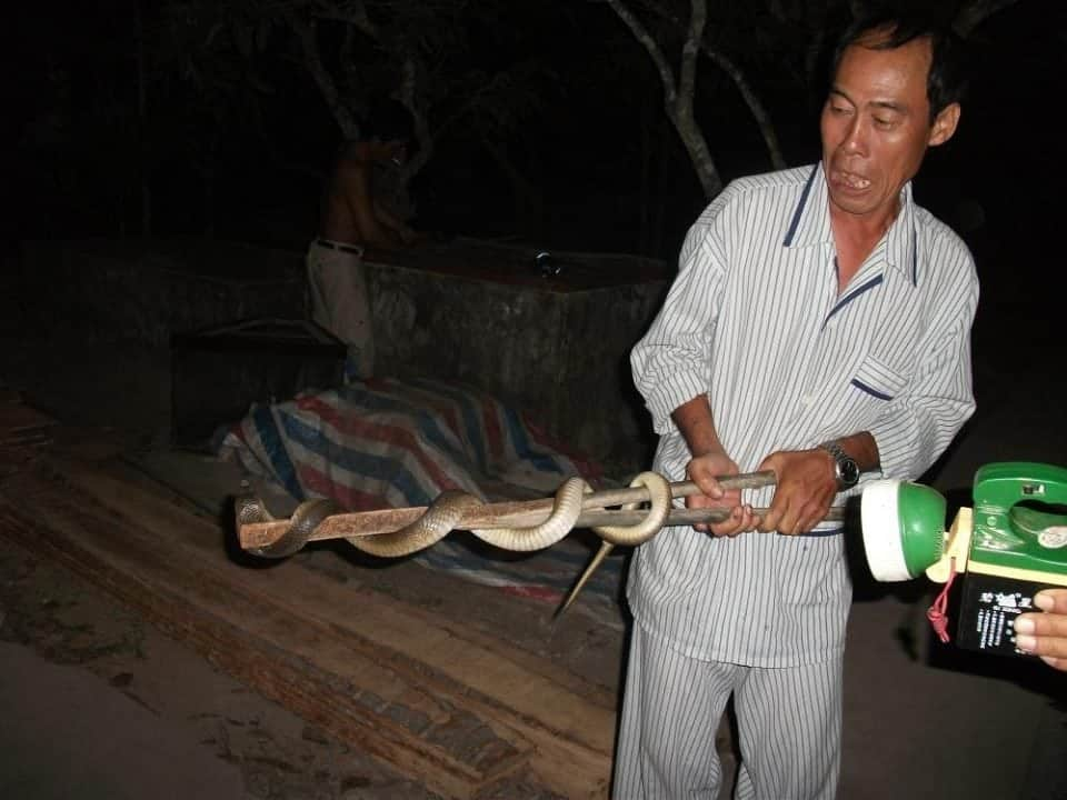 feel like eating some live cobra snake?