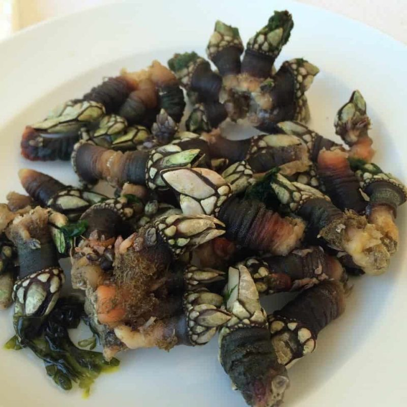 the truly weird food in Portugal percebes