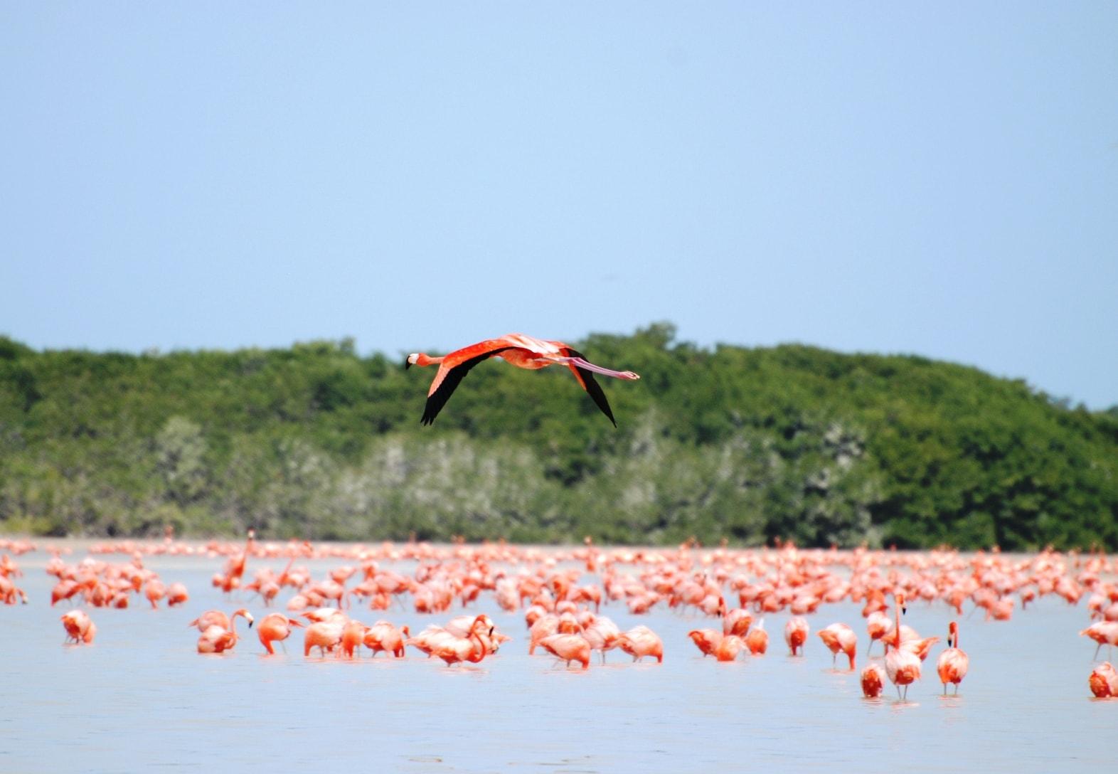 Chicxulub Yucatan The Gulf Coast- A Fantastic Place To