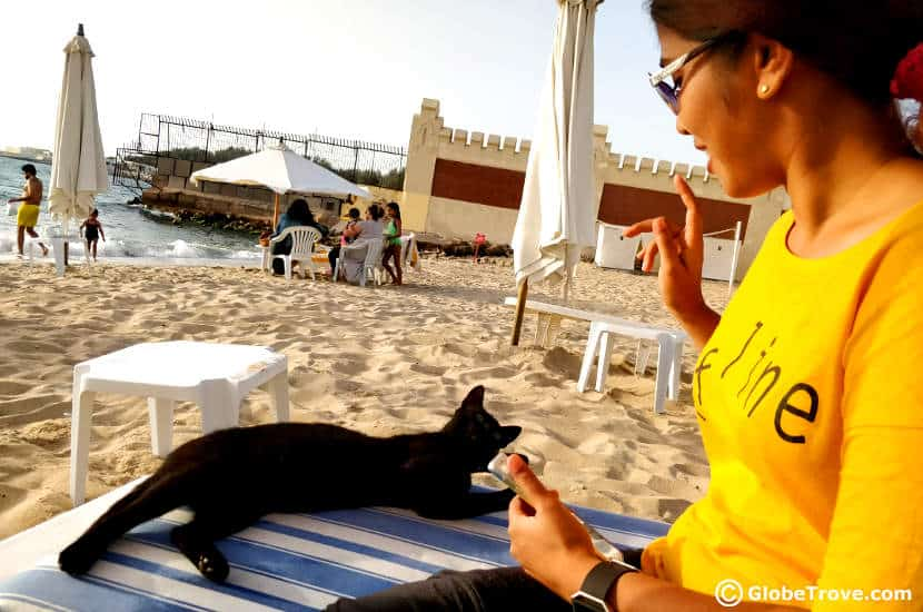 an Egyptian cat - animal friendly travelers