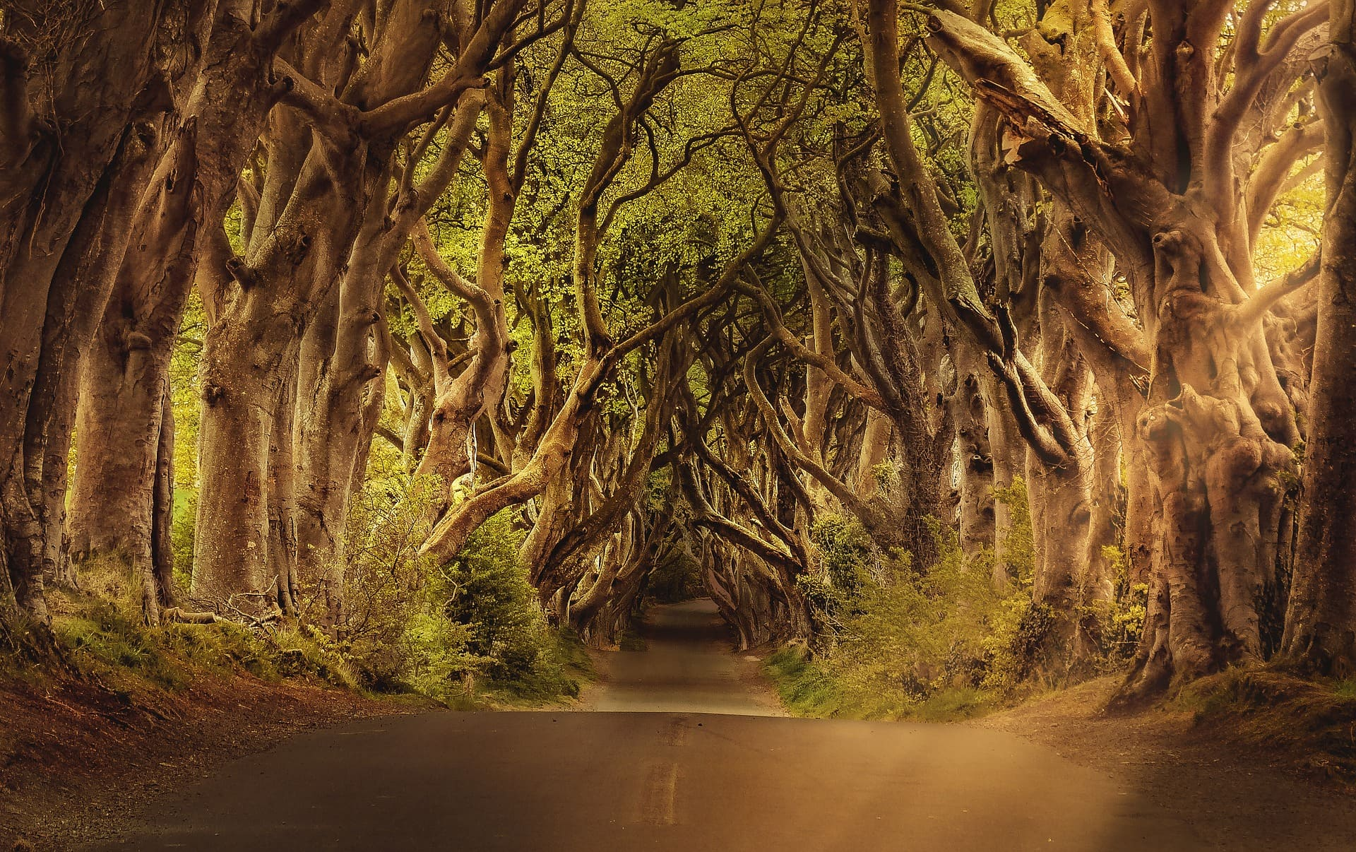 tips for travel to Ireland the Dark Hedges