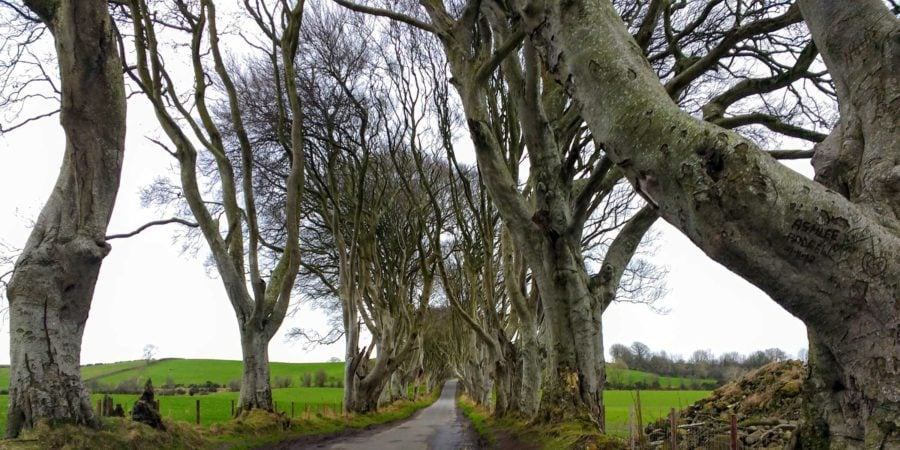 The Dark Hedges used in the filming of Game of Thrones