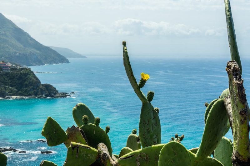 a southern Italy road trip to Calabria the beautiful blue hues of the Med with a yellow cactus plant and flower