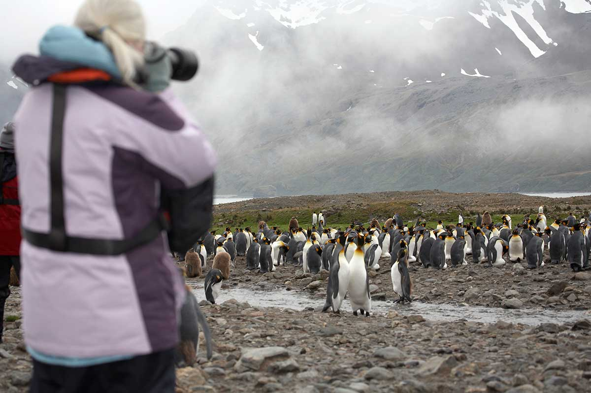 "photographing penguins in Antarctica a ""mature traveller"""