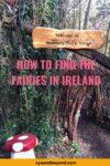 Finding Irish Fairies and fairy gardens in Ireland
