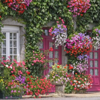 flowers in underrated destinations in Europe
